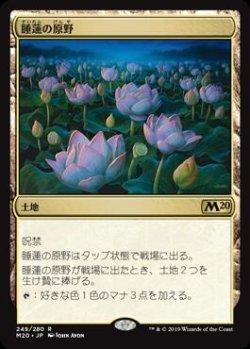 画像1: 睡蓮の原野