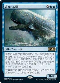 画像1: 追われる鯨